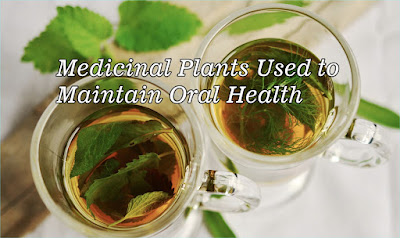 Medicinal Plants Used to Maintain Oral Health