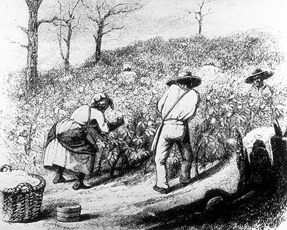 Andrew Jackson - Slavery