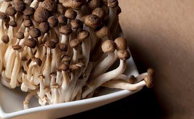 Shimeji mushroom supplier