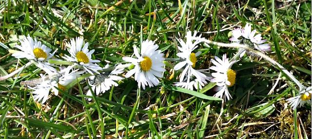 A daisy chain