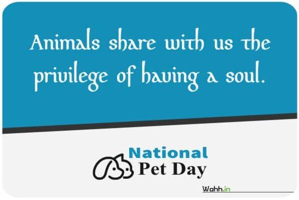Pet Day Quotes Greetings