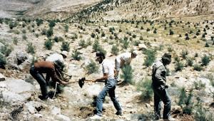 Israel Tanam Ribuan Gharqad untuk Yahudi Sembunyi, Kiamat?