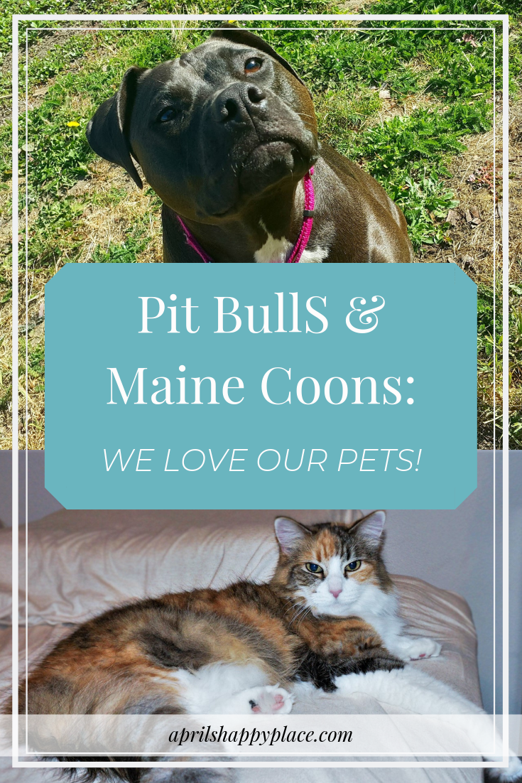Pit Bulls and Maine Coons: We Love Our Pets - April's Happy Place