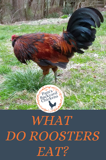 What do roosters eat? In their food rations, chickens need five basic components: carbohydrates, fats, proteins, vitamins and minerals. These components are the backbone of a healthy bird.