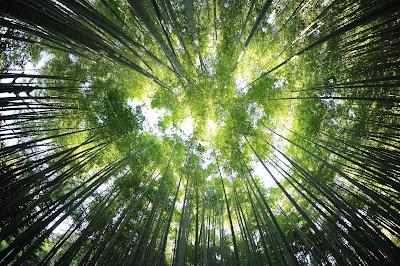 bosques, imágenes de bosques, el bosque,
