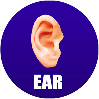 ear in spanish