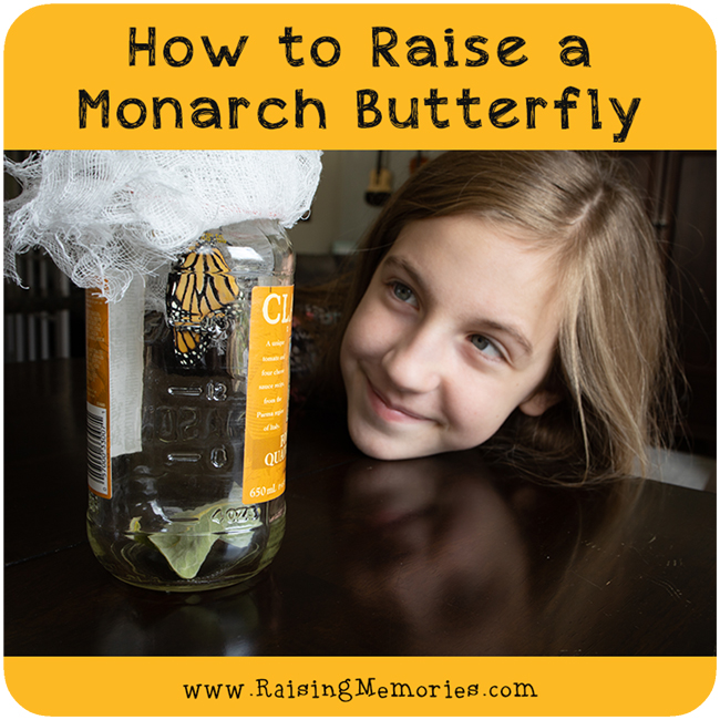 How to Raise a Monarch Butterfly