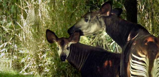 Jirafa de bosque y animales
