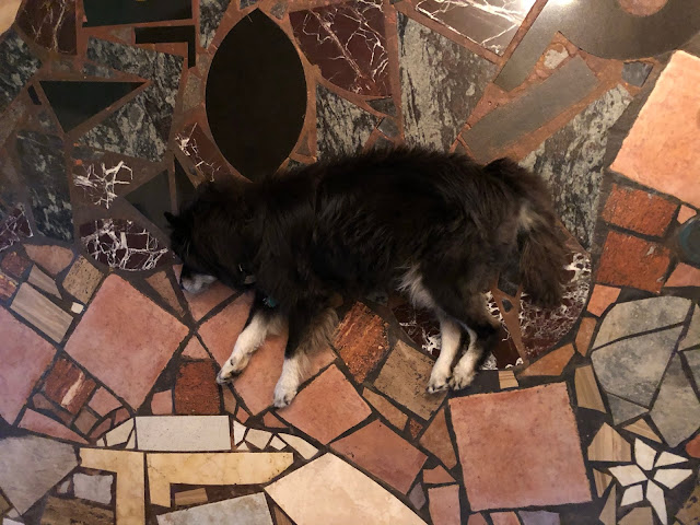 dog on tile floor