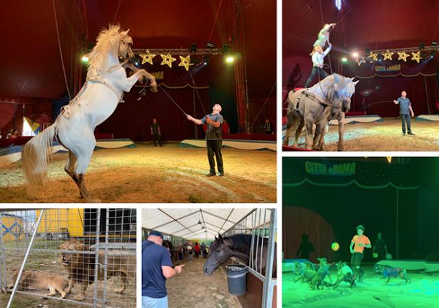 """Domodossola: polemiche social per il permesso al Circo, la replica agli animalisti: """"Funzione sociale dei circhi equestri"""""""