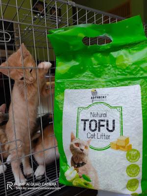 pemula pelihara kucing starter kit