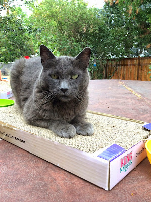 Beorn the cat on his scratching post