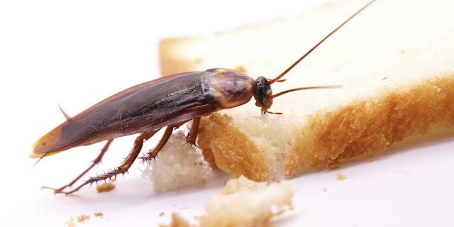 Métodos de control frente a cucarachas