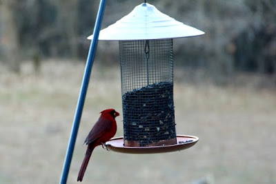 what we hope for at the front feeder