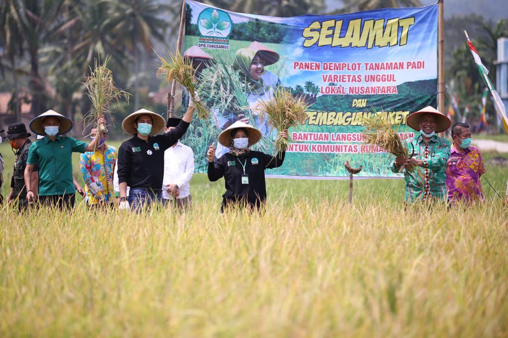 Penyerahan Bantuan Pupuk dan Bibit kepada Komunitas Rumah Tangga, Pemprov Lampung Ajak Stakeholder Dukung Program Ketahanan Pangan