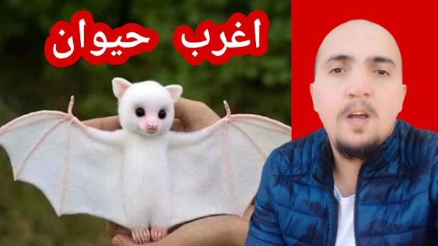 اغرب حيوان في العالم 😮 الخفاش الابيض