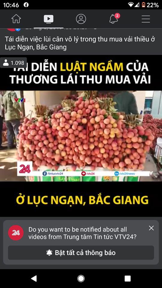 Phóng viên VTV dựng lên kịch bản luật ngầm của thương lái thu mua vải ở Bắc Giang?
