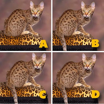 Which image is different? image 19