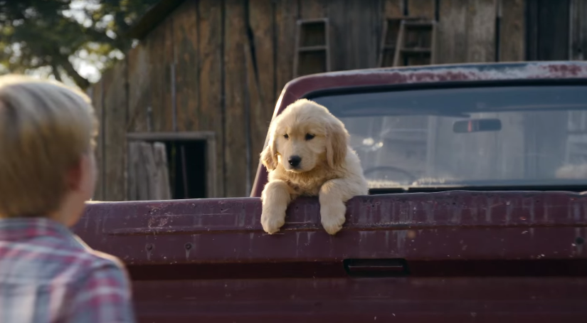 "First Bank""s Super Bowl ""Puppy Sale"" Ad Does Not End Well For This Sweet Boy or Does It?"