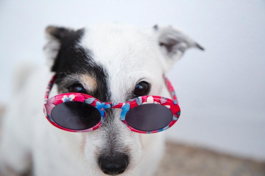 Jak dbać o psie oczy