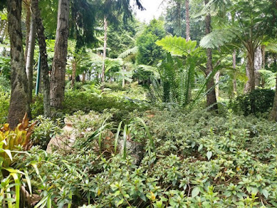 jardim tropical garden Monte Palace garden