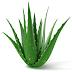 Magic of Aloe vera