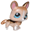 Littlest Pet Shop Special Corgi (#871) Pet