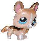Littlest Pet Shop Special Corgi (#871) Pet