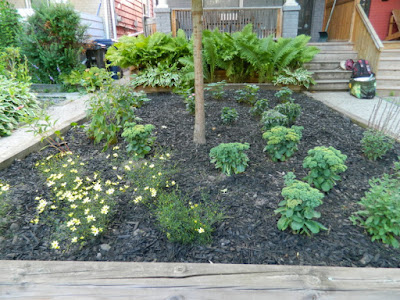 Toronto Leslieville Front Garden Weeding and Makeover After by Paul Jung Gardening Services--a Toronto Organic Gardening Company