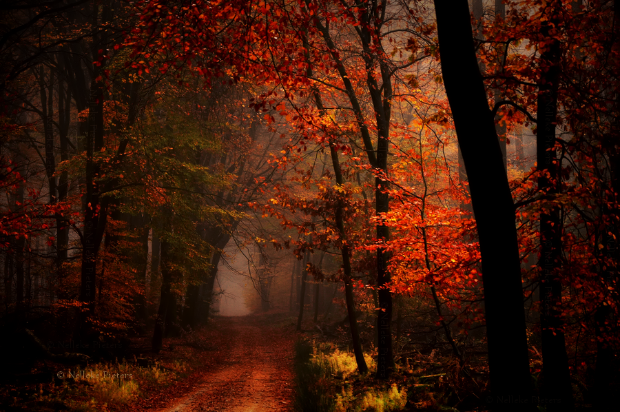 Fall Colors Wallpaper 1920x1080 Something Wicked This Way Comes Dark Fall