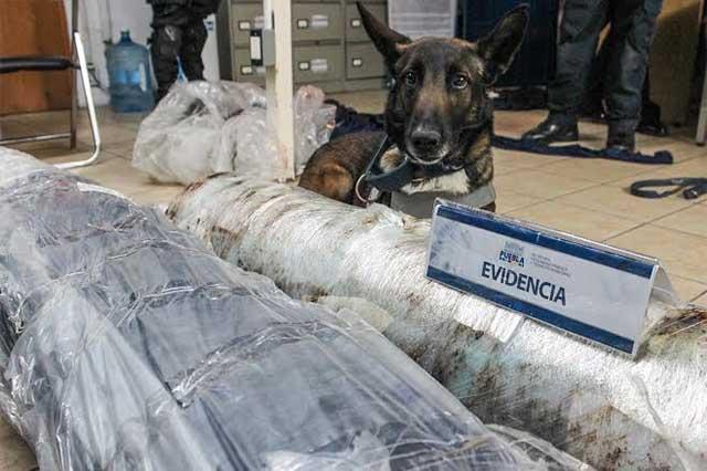 "45 kilos de marihuana asegurados gracias a perro ""zapo"""