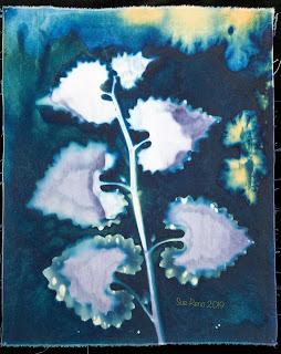 Wet cyanotype_Sue Reno_Image 593