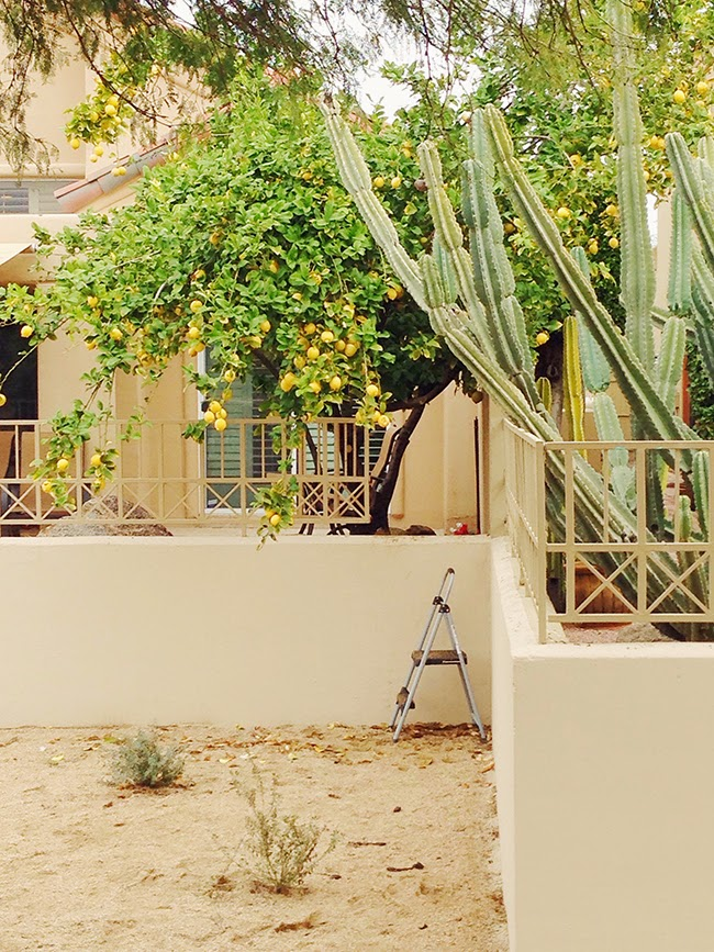 Arizona Lemon Trees and Cactus Plants // A Style Caddy