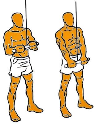 Extensión tríceps polea ejercicio hombre ejercicio