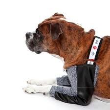 fisioterapia para cães com escaras