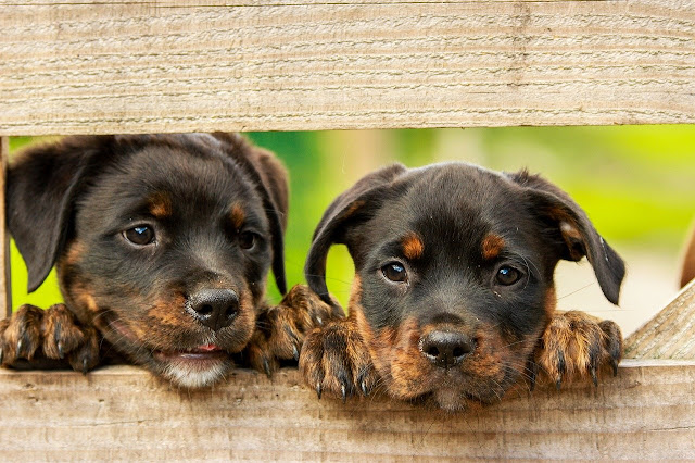 140+ Cute puppy wallpaper for computer