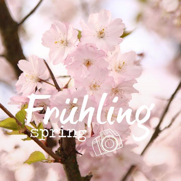 fruehling-spring, pinboard titelbild