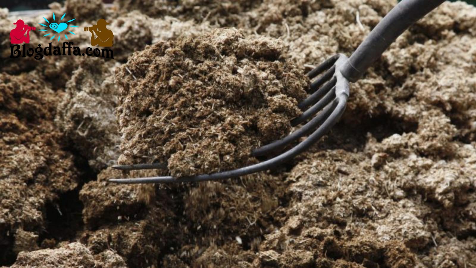 Cara membuat pupuk kompos dari kotoran binatang