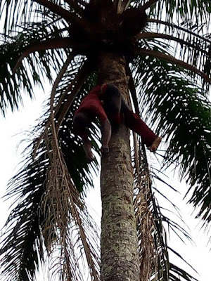 Photos: Man reportedly found dead ontop of palm tree in Imo State