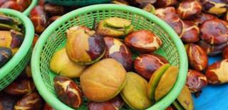 Manfaat buah Jengkol untuk Kesehatan