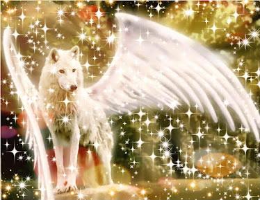 angelo lupo ali