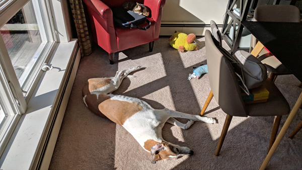 image of Dudley the Greyhound lying on the dining room floor in a patch of sunshine; in the background, Sophie the Torbie cat naps on a red chair, next to a portfolio
