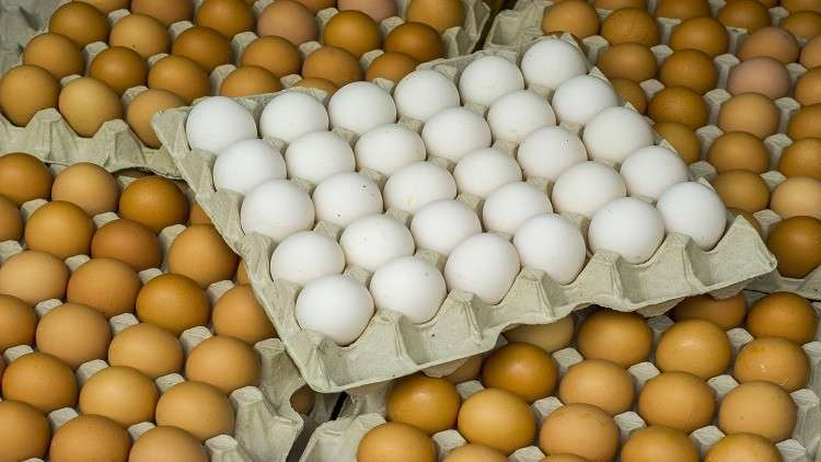 What is the difference between brown and white eggs