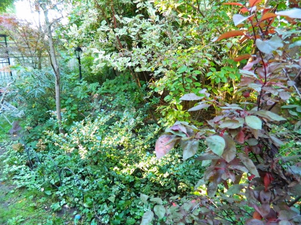 Toronto garden cleanup Annex Paul Jung Gardening Services west side before