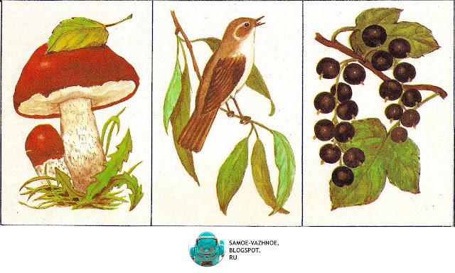Советские игры. Игра Шесть картинок Г. Крюкова 1986, Игра природа, растения, лес, грибы, птицы, цветы, ягоды  СССР.