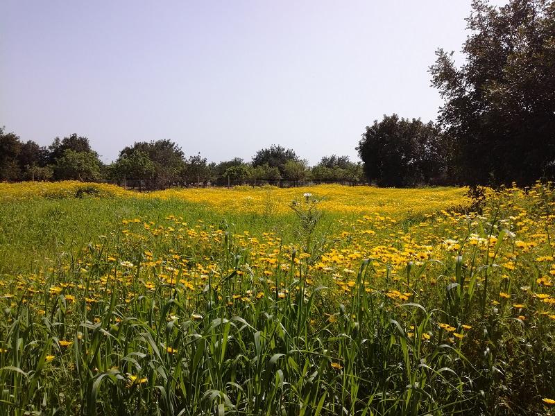 Fuori Campanet, Mallorca
