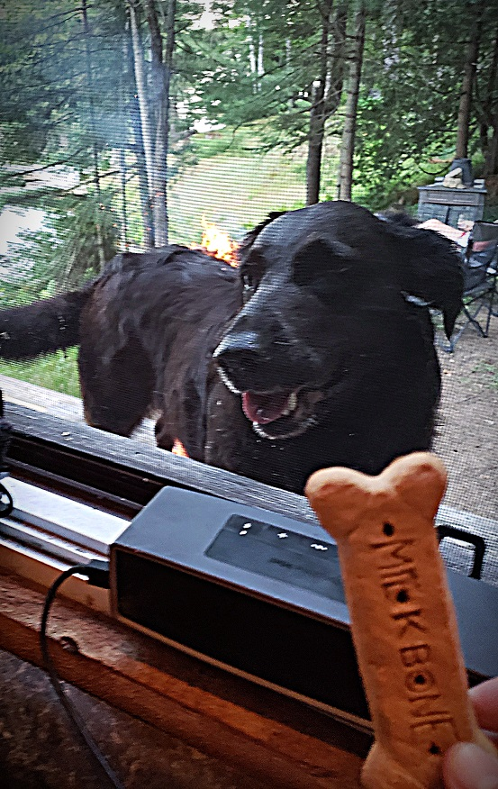 dog and cookies on orillia lake