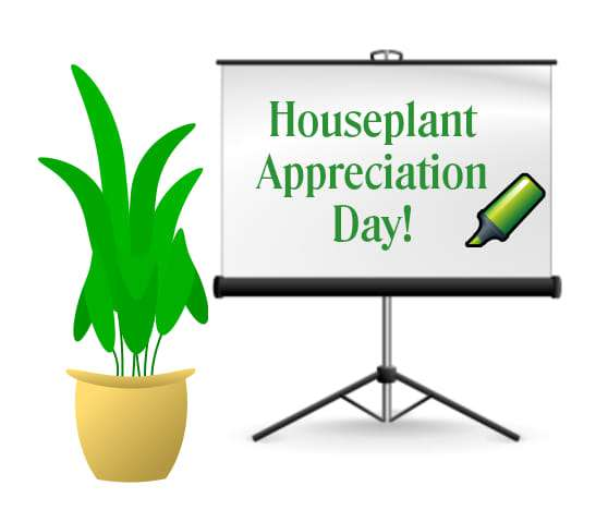 National Houseplant Appreciation Day Wishes Lovely Pics