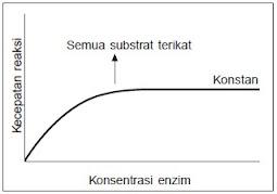Grafik Hubungan Enzim dengan Konsentrasi Enzim