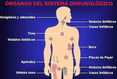 Dibujo del Sistema Inmune para niños